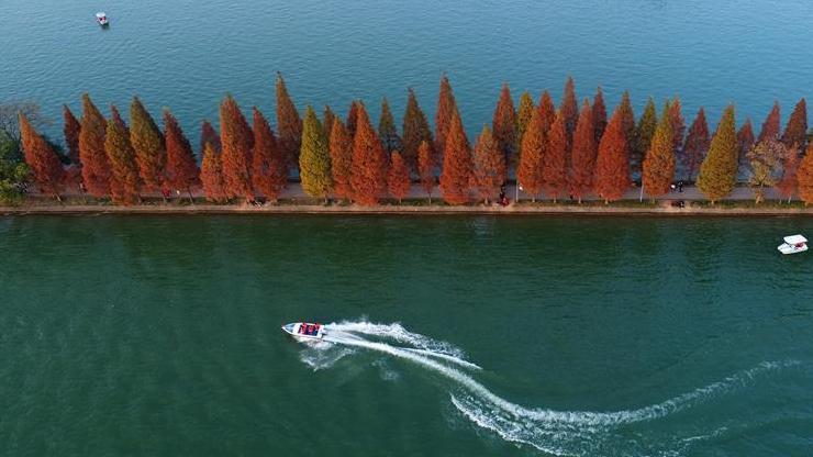 层林染翠湖