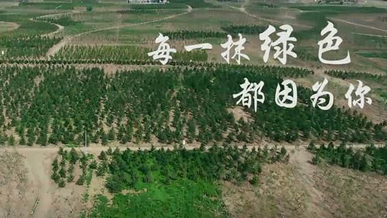 每一抹绿色都因为你——造林工程师在雄安的日子