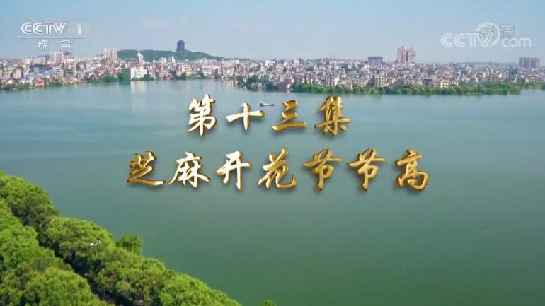 《我们一起走过——致敬改革开放40周年》 第十三集 芝麻开花节节高