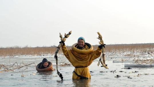 白洋淀深冬挖藕人:冰层下探寻年夜饭鲜嫩滋味