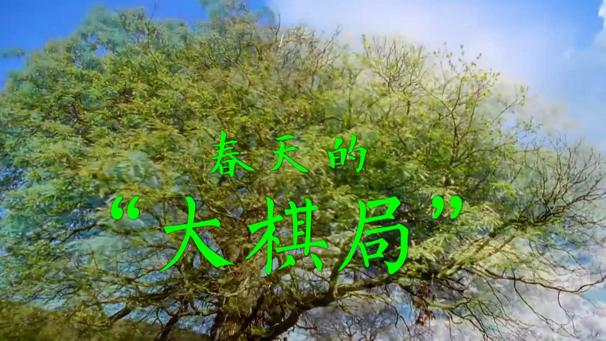 """春天的""""大棋局"""""""