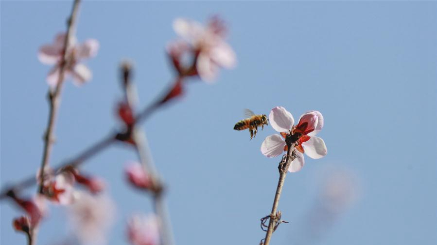 春季花争艳