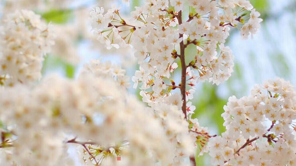 春分丨百花争明媚 莫负好春光