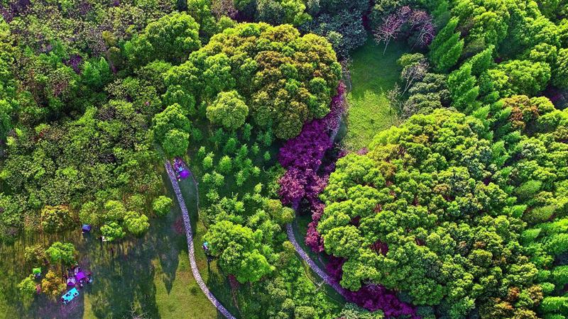 世界森林日|关于森林 这些知识你知道吗?