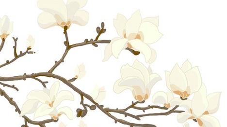 """【科普】""""有花而无叶""""的奥秘你知道吗?"""