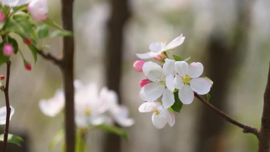 视频丨春·色