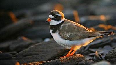 世界候鸟日丨这些候鸟你能叫上名字吗?