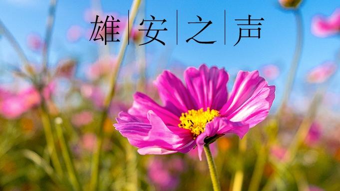 【雄安之声】20190517