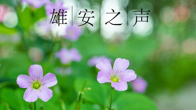 【雄安之声】20190723