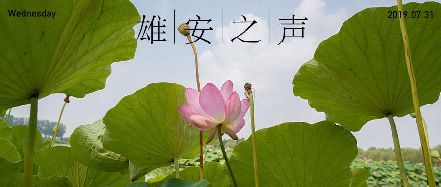 【雄安之声】20190731