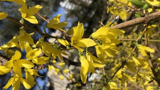 秋风吹 你准备好登高赏枫了吗?