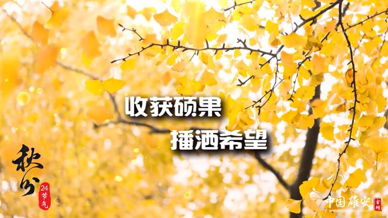 秋分|收获硕果 播洒希望