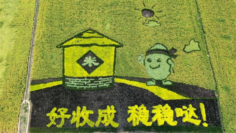 稻田作画庆丰收