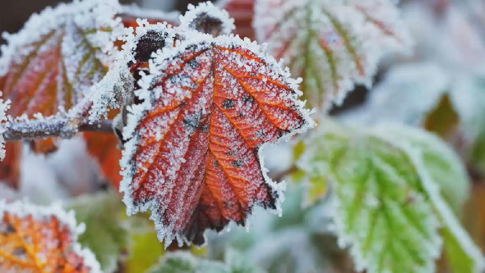 霜降|在秋的最后 极尽绚烂