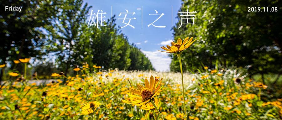 【雄安之声】20191108