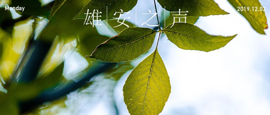 【雄安之声】20191202