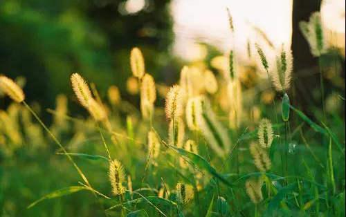 每日一诗丨野草,那柔软的力