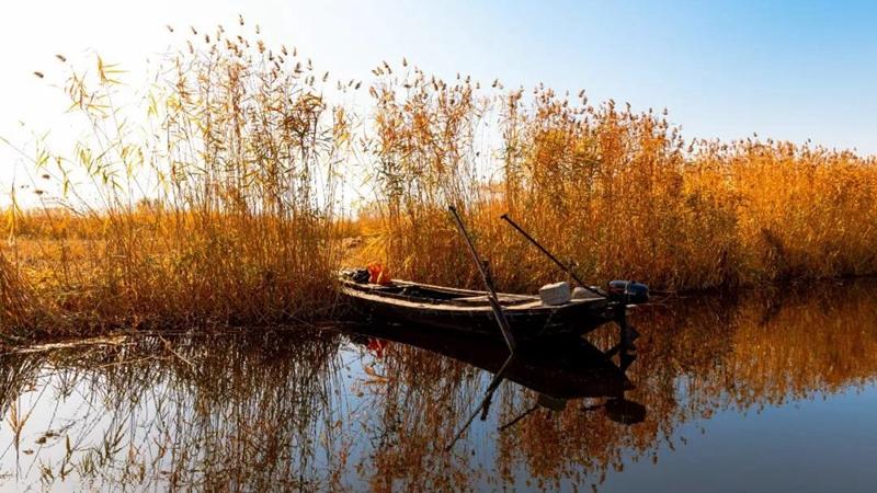 每日一诗丨白洋淀的苇