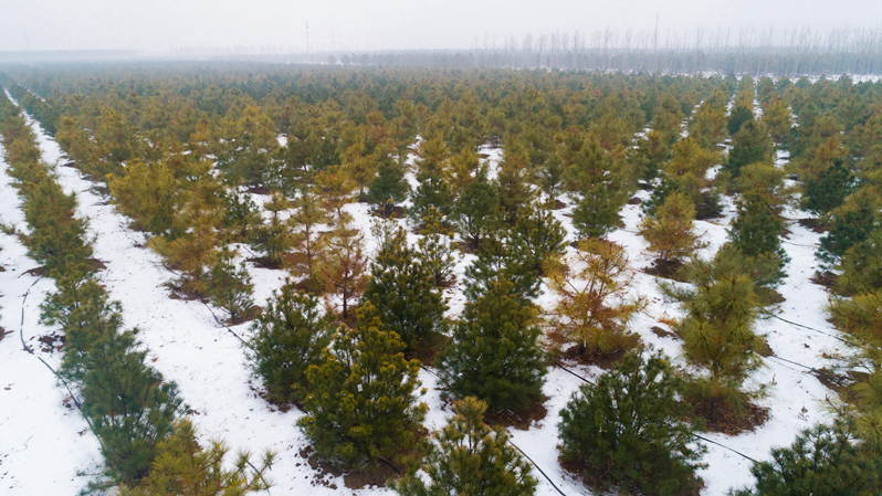 冬日雄安,动人雪景美如画