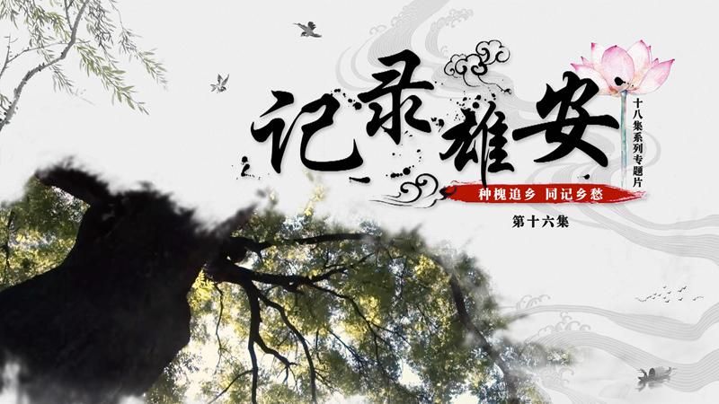 《记录雄安》第十六集:种槐追乡 同记乡愁