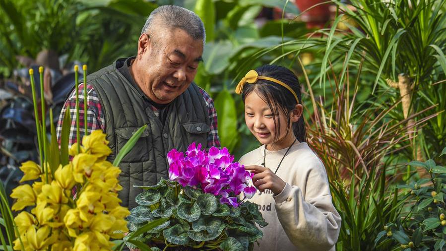 河北故城:绿植走俏迎新年