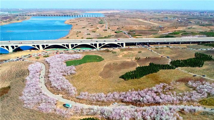 河北石家庄:滹沱河畔赏春光