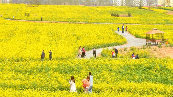 河北沙河: 花海丛中感受春意