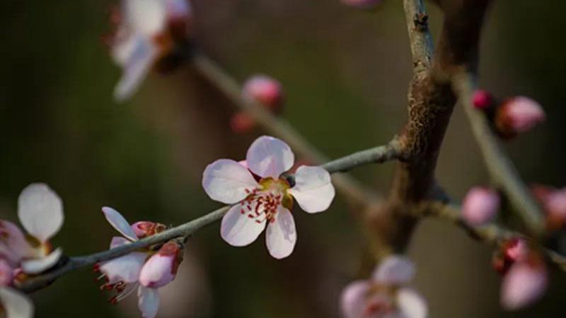 每日一诗丨雄安,请记住这个春天
