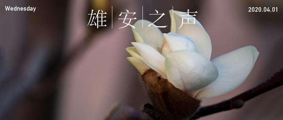【雄安之声】20200401
