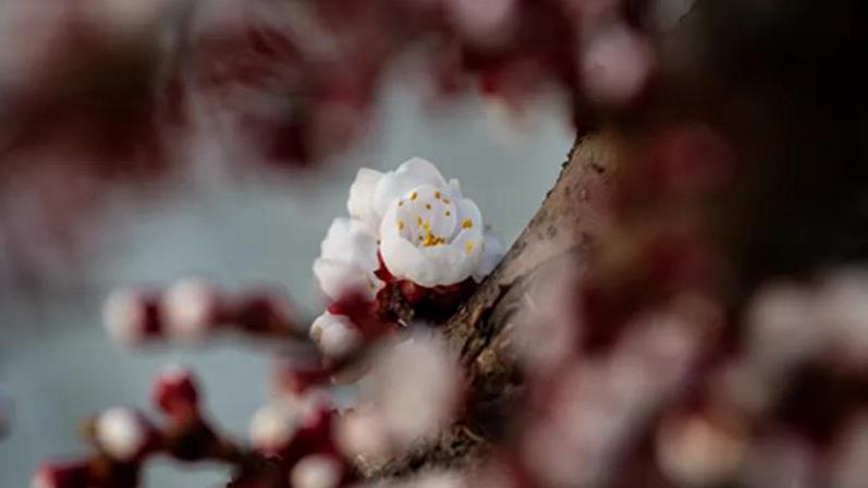 每日一诗丨春之歌