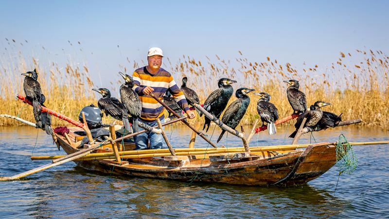 """""""声""""韵雄安⑨丨淀上渔家——白洋淀上的渔民生活"""