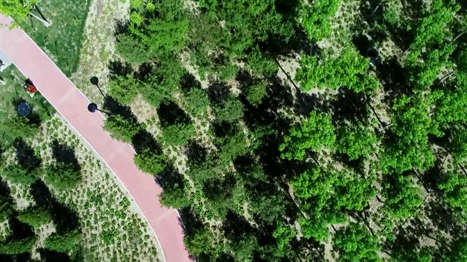 探访|河北保定大力推进环雄安新区生态林带建设