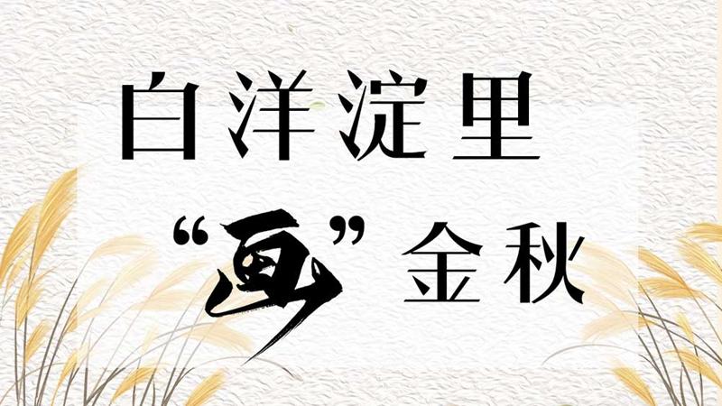 """白洋淀里""""画""""金秋"""