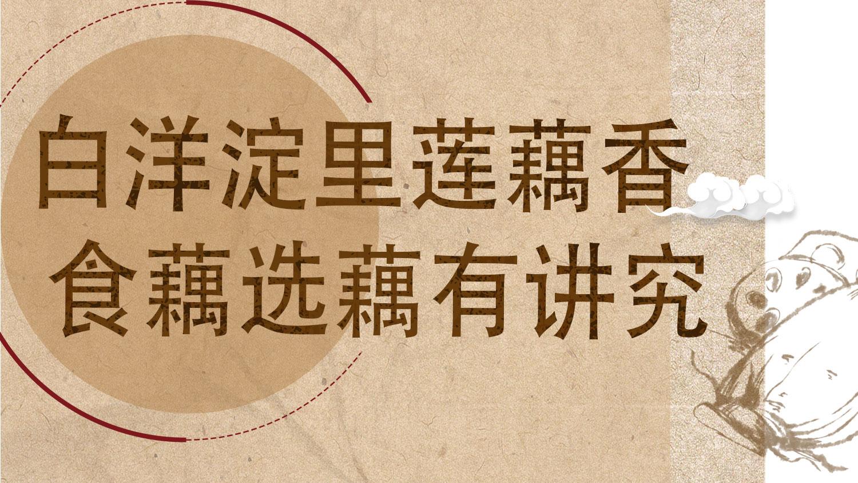 白洋淀里莲藕香 食藕选藕有讲究