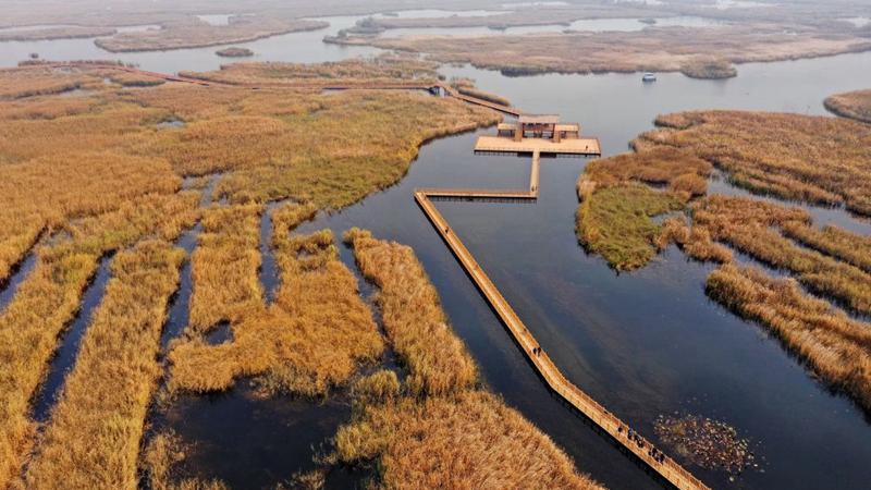 白洋淀水生态环境持续改善