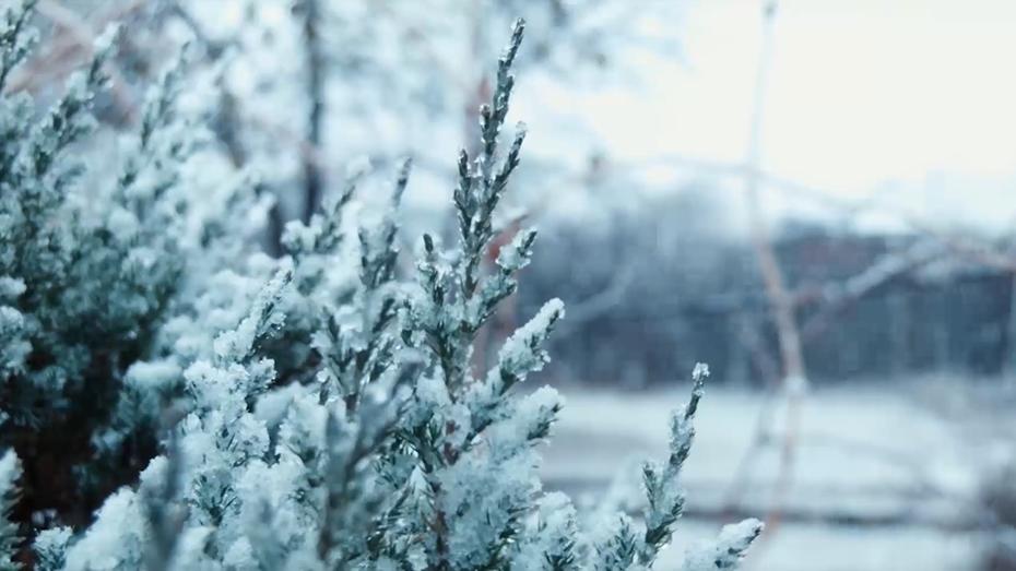 冬至|冬藏之气 至此而极