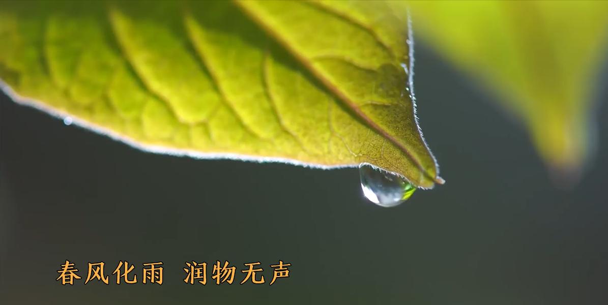 雨水|春雨至 万物清明