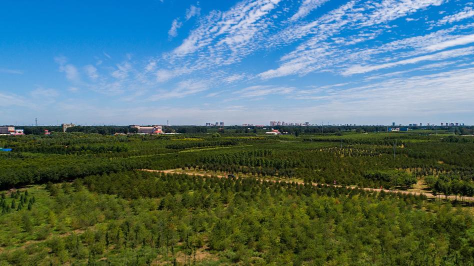雄安新区森林草原防灭火工作水平有效提升 筑牢千年大计绿色基底