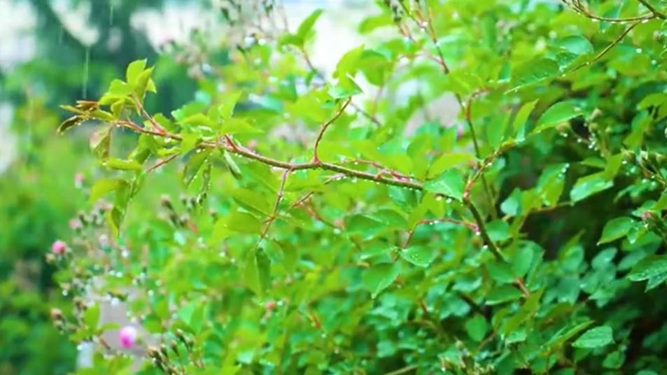 谷雨丨春夏交时 雨生百谷