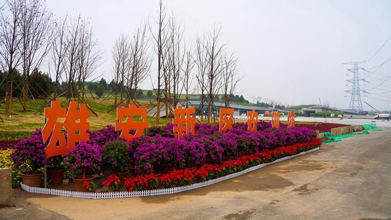 赏生态美景 品燕赵文化 雄安郊野公园建设基本完成