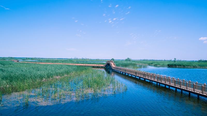 报告显示:雄安新区和白洋淀生态保护取得明显成效