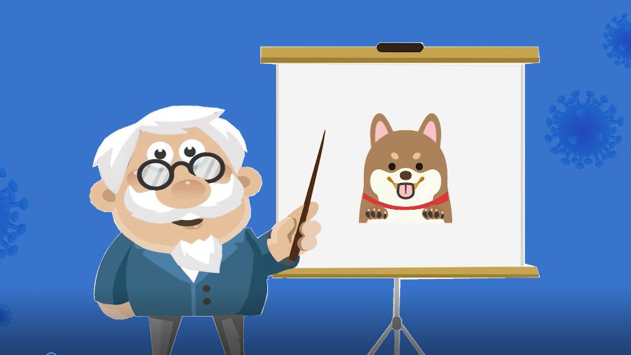世界狂犬病日丨近100%病死率,这些知识要牢记!