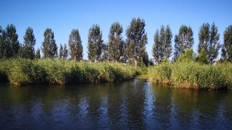 雄安新区将建两处生态湿地 预计明年建成
