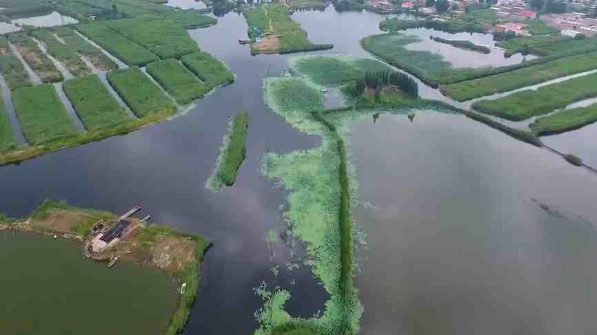 【视频】雄安新区安新县全面清除白洋淀水域内水产养殖